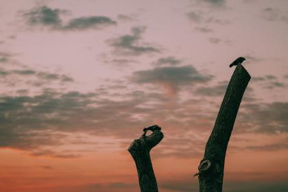 clouds, sky, sunset, nature, wood, bird, animal