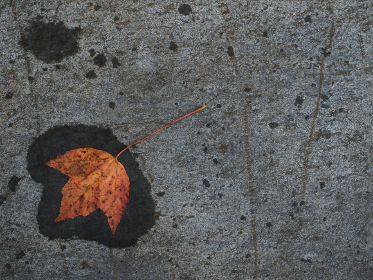 Photo of autumn leaf