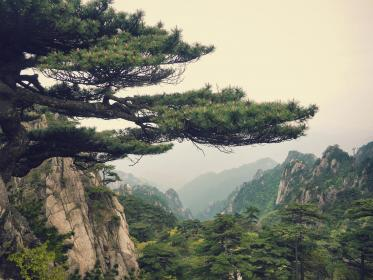 mountain, landscape, china, pine, view