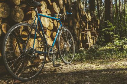bike, bicycle, fitness, exercise, outdoors, wood, forest, nature, woods, trees, lumber, sun