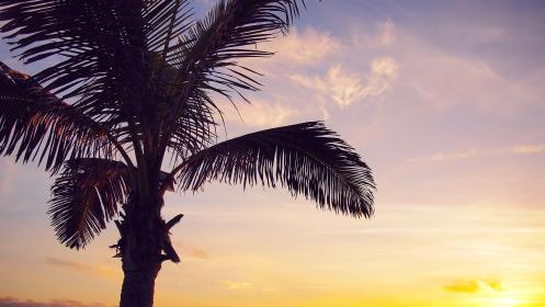 sunset, sky, clouds, dusk, silhouette, palm tree, nature, vacation, travel, paradise