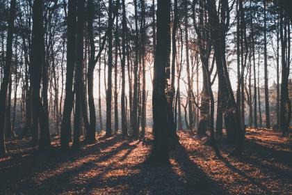 nature, landscape, forest, woods, sun, sunny, leaves, green, autumn, fall