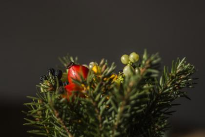 tree, plant, red, fruit, display, artificial, design