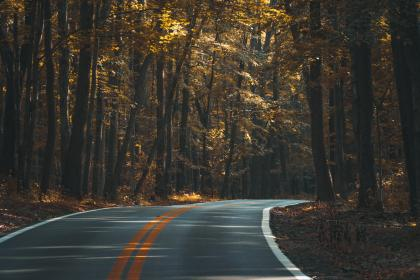 trees, nature, woods, brown, orange, grass, road, outdoor, summer, fall, autumn
