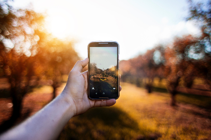 blur,  bokeh,  autumn,  mobile device,  telephone,  photograph,  photo,  cc0,  technology,  forest,  wood,  tree,  nature