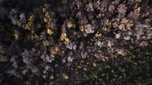 aerial, view, trees, plant, nature, fall, autumn