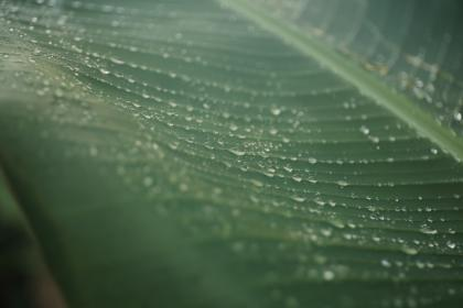 leaves, green, veins, water, rain, drop
