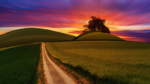 hills,  farms,  sunset,  path,  nature,  track,  colorful,  purple,  red,  orange,  yellow,  green,  grass,  landscape,  panorama,  wallpaper