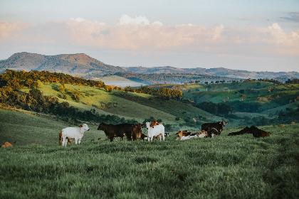 goats,  beautiful,  hillside,  scenic,  landscape,  animals,  farm,  farm animals,  herd,  sunny,  morning,  surise, spring