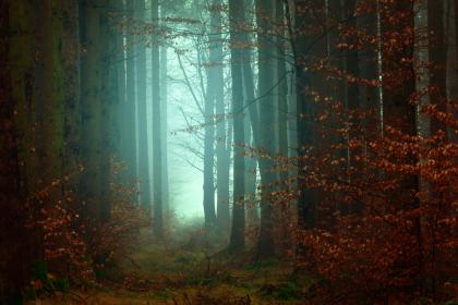 trees, plant, forest, fog, cold, weather, outdoor, nature