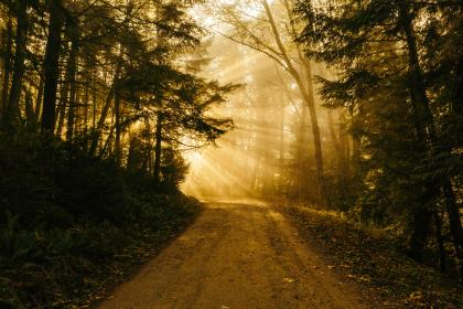 dirt, road, rural, sun rays, sunlight, sunset, dusk, trees, forest, woods, nature