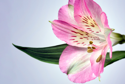 macro,   flower,   petals,   nature,   beautiful,   fresh,   organic,   bloom,   blossom,   botany,  pink,  floral,  detail,  pollen