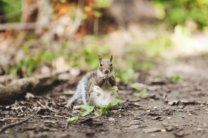 squirrel, animals, nature