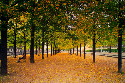 city,  park,  autumn,  fall,  leaves,  trees,  row,  benches,  parkbench,  sitting,  people,  calm,  still,  brown,  green,  walkway