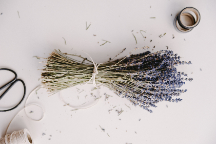 free photo of lavender   herb