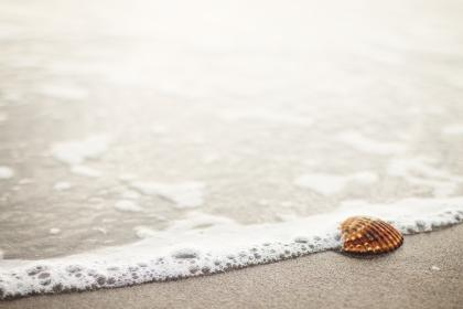 sea shell, beach, sand, shore, ocean, sea, water, summer