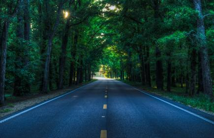road, rural, country, trees, afternoon, travel, roadtrip