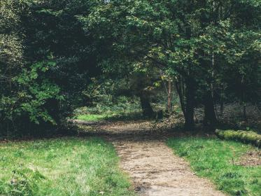 green, grass, trail, path, park, trees, leaves, outdoors, nature, branches, bushes, shrubs