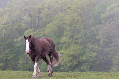 horse,   pasture,   equine,   peaceful,   grass,   grazing,   nature,   animal,   scene,   outside,   outdoors,  fog,  trees,  farm,  wild