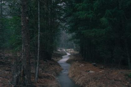 forest, woods, water, stream, trees, nature