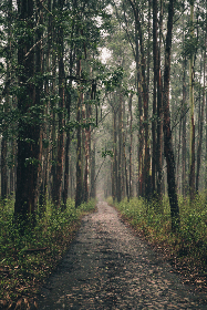 forest,  hiking,  path,  woods,  nature,  rural,  environment,  outdoors,  outside,  trees,  travel,  adventure,  wanderlust,  trail,  landscape,  gloomy,  misty