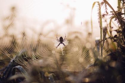 free photo of spider  web