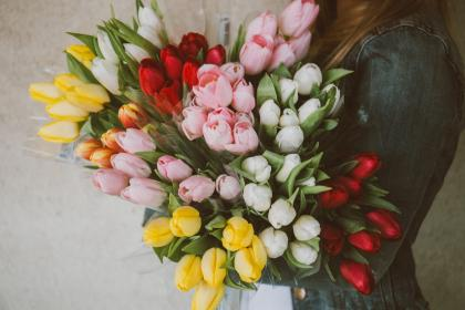 tulips, flowers, bouquet, girl, woman, people, easter