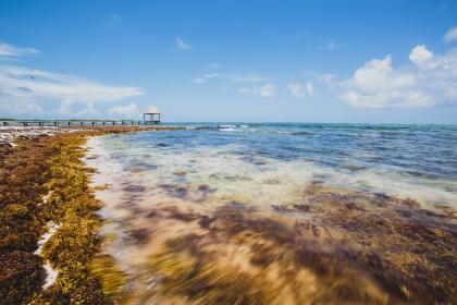 ocean, sea, coast, seaweed, pier, gazebo, blue, sky, water, sunshine, summer