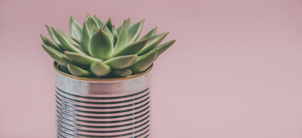 pink,   house,   plant,   cactus,   green,   can,   pot,   leaves,   minimal,   househld,   color,   flora,   flower,   leaf,   spine,   still life,   backgound