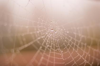 free photo of spider web  dew