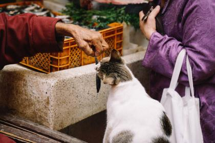 people, market, animals, cat, fish, eat, feed