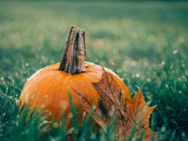 Photo of grass and a pumpkin