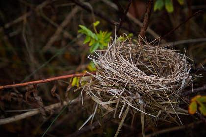 bird,  nest,  nature,  habitat,  home,  tree,  branches,  animal,  wildlife,  hay,  straw