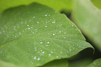 nature, landscape, green, leaves, veins, water, drop, rain