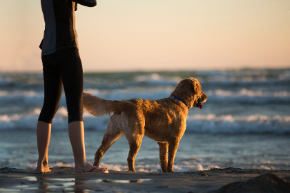 woman,  dog,  beach,  sea,  ocean,  retriever,  labrador,  golden,  golden hour,  leggings,  waves,  surf,  sand