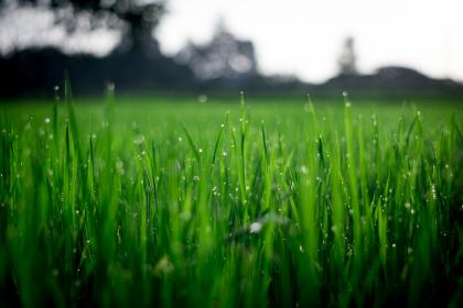 green, plant, grass, agriculture, crops, nature, field, farm, backyard, blur, bokeh, water, raindrops