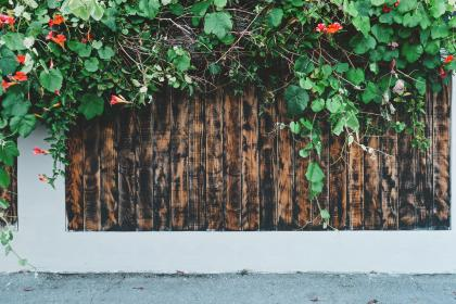 woodgrain, fence, vines, plants, sidewalk