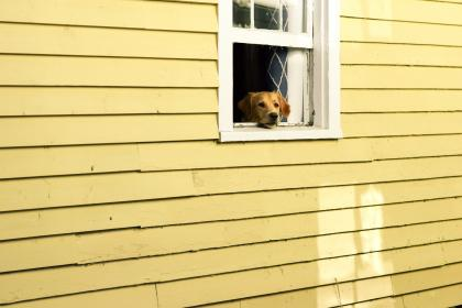 house, window, pet, animal, dog, puppy, wall