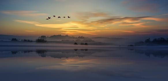 sunset, clouds, sky, view, birds, animal, flying, trees, plant, nature, water, reflection