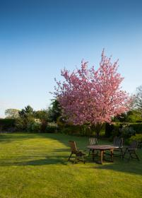 nature, garden, lawn, yard, chairs, tables, grass, bushes, trees, sky, pink