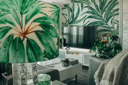 nature,  theme,  room,  plant,  tv,  television,  interior design,  home,  house,  couch,  throw,  table