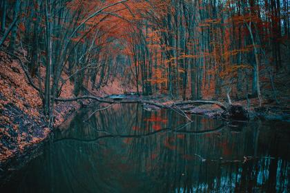 nature, landscape, forest, trees, leaves, branches, twigs, stream, river, water, reflection, rocks, lush, picturesque