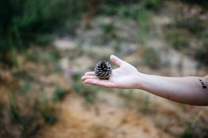pine, cone, hand, palm, arm, blur, outdoor, nature