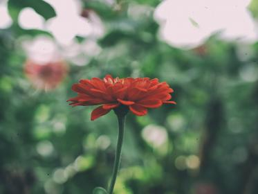 flower, plants, nature, petals, blur, bokeh