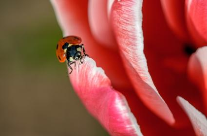 flower, red, petal, bloom, garden, plant, nature, autumn, fall, insect, bee, nectar