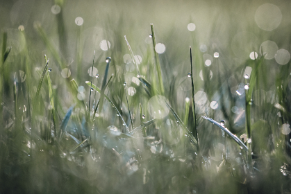 dew,  grass,  bokeh,  background,  wet,  mist,  nature,  natural,  plants,  abstract,  morning,  land,  field, wallpaper