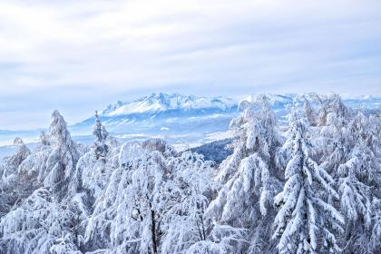 trees, plants, mountain, landscape, snow, winter, ice, cold, weather, sky, cloud, nature, view, travel