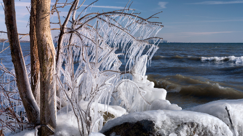 frozen,  tree,  branch,  rain,  frost,  ocean,  waves,  cold,  winter,  freeze,  ice,  icy,  nature,  coast,  branches,  water