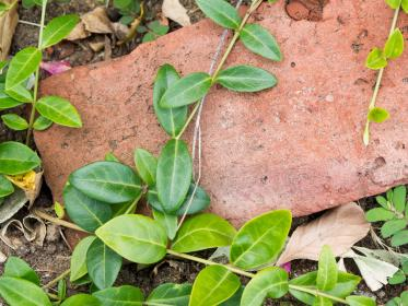 nature, leaves, vines, creep, ground, soil, rocks, garden, outdoors