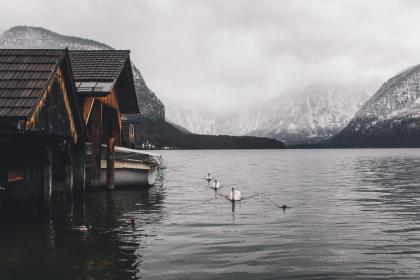 nature, landscape, house, home, swan, water, ocean, sea, mountain, white, beak, rest house